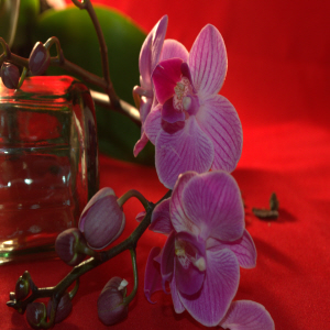 orchid flower with red background for Events|Socialise, Network, Workshop, Talks & Seminars, conferences, parties, exhibitions, performances Food & Beverage, Health and Lifestyle, Philosophy, Knowledge & Information